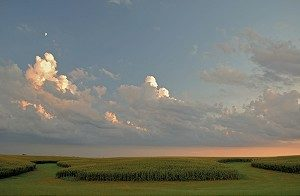 Summer sunset reflects on clouds and moon shines over tassled corn