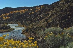 Rio grande flows past sage, chamisa and colored cottonwoods